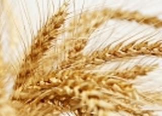 На экспорт ушло более 12 млн т украинской пшеницы