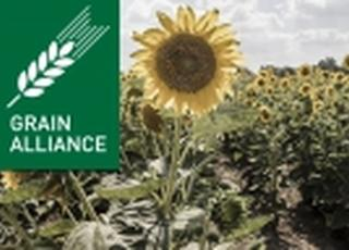 Grain Alliance ушла в убыток