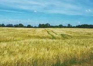 Уряд розгляне зміни до закону щодо умов обігу земель сільгосппризначення