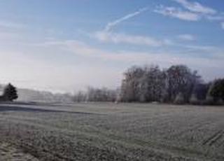 Через погодні умови прогнозується збільшення ураження рослин хворобами