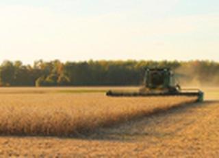 В Запорожской области ожидают рекордный урожай